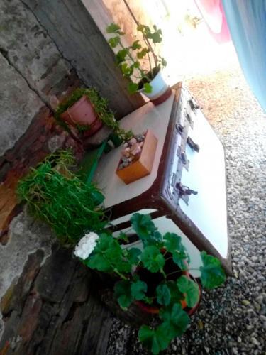 alojamiento-en-pension-santa-rosa-samos-06